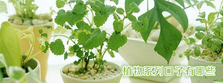 植物系列口子有哪些