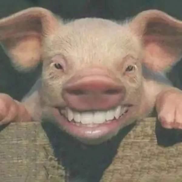 抖音猪年头像壁纸-2019猪年壁纸卡通无水印大全