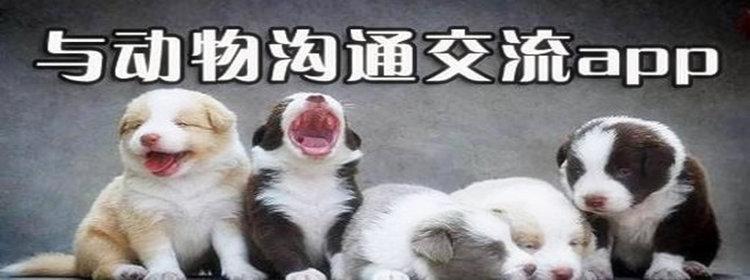 动物翻译器合集