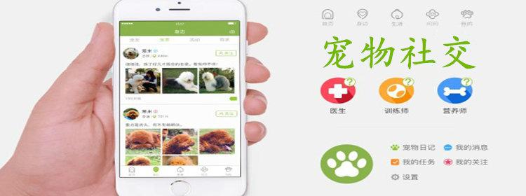 宠物社交app