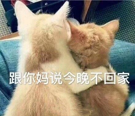 猫咪跟你妈?#21040;?#26202;不回家表情包