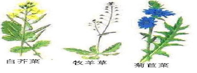 拍照识别植物软件