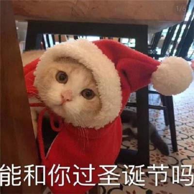 2019貓咪圣誕帽情侶頭像