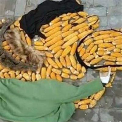 王思聪吃玉米头像大全