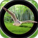 森林鸟狩猎