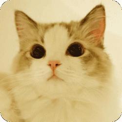 猫狗宠物助手