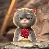 斑布貓戴金箍視頻壁紙