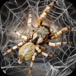 蜘蛛模擬生存模擬器