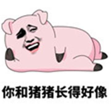 愛情公寓5豬豬公寓表情包