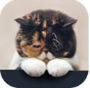 貓齡計算器app
