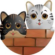 双猫靓女彩购软件