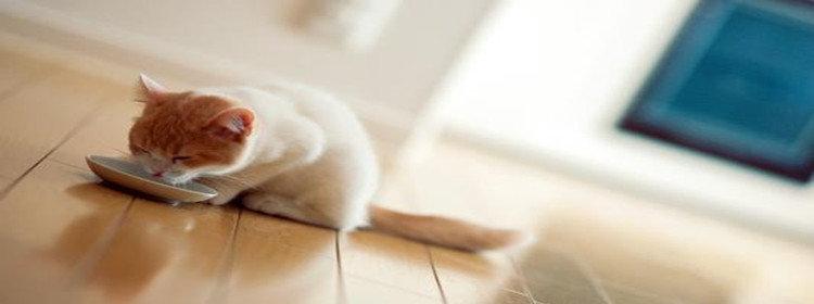 宠物桌面软件合集