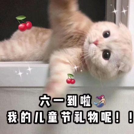貓咪六一兒童節表情包