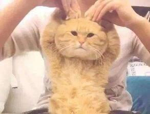 抖音三只貓點頭表情包