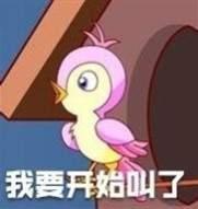 七夕布谷鸟头像表情包