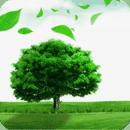 牛气森林app